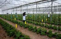 افزایش 3 برابری هنرستانهای کشاورزی وابسته به وزارت جهاد کشاورزی از 8 به 24