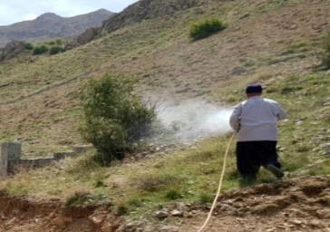 مبارزه با آفت عمومی ملخ در ۲۵۰هکتار از مزارع شمیرانات