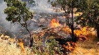 آتش سوزی جنگل ها و مراتع به تهران رسید