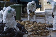 موردی از آنفلوآنزای فوق حاد پرندگان گزارش نشده است