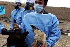 ایران کاملا عاری از آنفلوآنزای فوق حاد پرندگان است