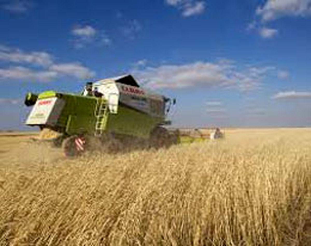 پرداخت ۹۳ میلیارد تومان بهای خرید تضمینی گندم به کشاورزان همدانی