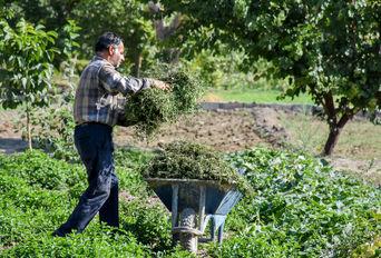 سبزیکاری سنتی در پایتخت صنعتی ایران