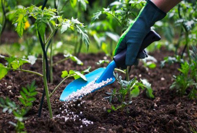 تامین و توزیع کودهای ترکیبی آلی و فسفاته در دستور کار شرکت خدمات حمایتی کشاورزی