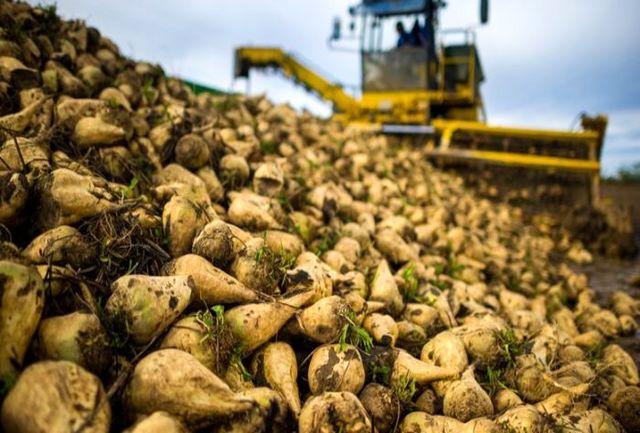 پنج میلیون قطعه نشا چغندر قند در کردستان تولید شد