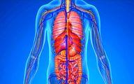 حقایقی شگفتانگیز درباره بدن انسان که نمی دانید!
