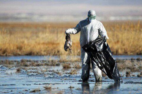 هشدار؛ پمپاژ آب دریای خزر به سمت میانکاله/ آب میانکاله شور شده است/ خطر خشک شدن میانکاله جدی است