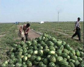 بازگشت ۶ واگن هندوانه صادراتی به ترکیه