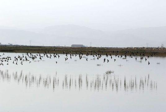 تالاب بین المللی کمجان برای جان بیشتر نیاز به حق آبه دارد