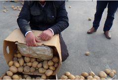 کشف صدها کیلو از بار سیبزمینی در ارومیه