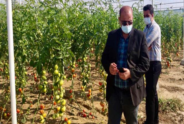 توسعه گلخانه های تجاری در منطقه خمیر