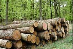 کشف بیش از 4 تن چوب قاچاق در شفت