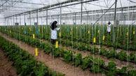 هدفگذاری برای راه اندازی ۵۰ هنرستان کشاورزی در کشور