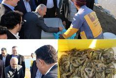 بازدید وزیر جهاد کشاورزی از مزرعه ۲۰۰هکتاری پرورش میگو در شور اول بندرعباس