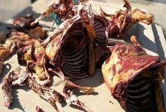 کشف گوشت گورخر از منزل یک شکارچی!