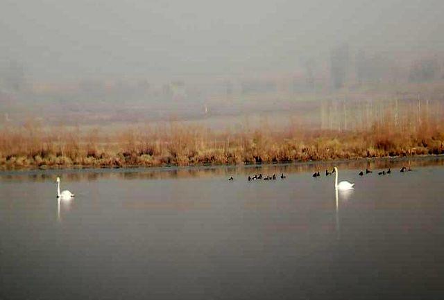 تالاب اله آباد آبیک میزبان 22 گونه پرنده آبزی و کنار آبزی است
