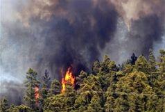 در معرض خطر حریق بودن بیش از نیمی از جنگل های استان