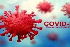 آمار مبتلایان به ویروس کرونا در استان سیستان و بلوچستان تا 25 مرداد 99 به 12224 نفر رسید