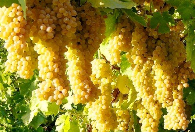 تسکین کمردرد با مصرف این میوهها