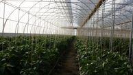 هرمزگان حائز رتبه نخست کشوری در صدور مجوز گلخانه