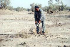 جمع آوری بیش از 2 هزار تله زنده گیری هوبره در ایرانشهر