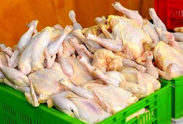 نیاز مرغ در آذربایجانغربی ۲۳۰  تن در روز است