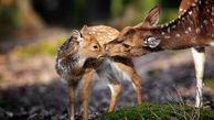 سازمان محیط زیست هرگز تنوع زیستی و حیات وحش کشور را فدای مصالح زودگذر نمی کند