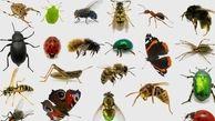 آیا حشرات ناقل بیماری کرونا هستند؟