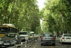 کاشت 1100 اصله درخت چنار سالم و قوی در خیابان ولیعصر(عج)