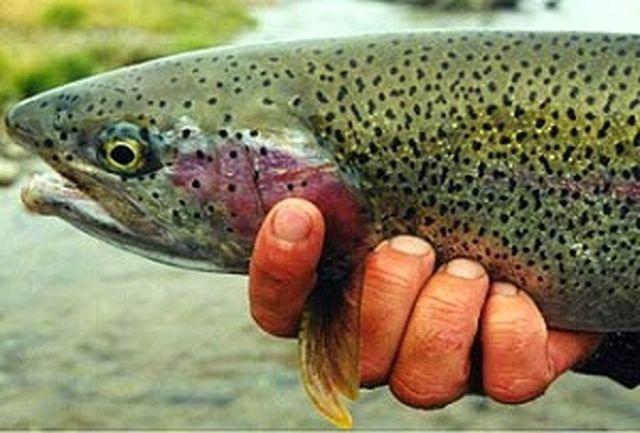 انجام یک هزار و 75 مورد آزمایش تشخیص بیماری های ماهیان سردابی