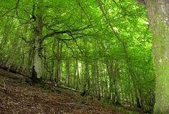 ۲۰۰ هکتار از اراضی نهاوند جنگل کاری می شود