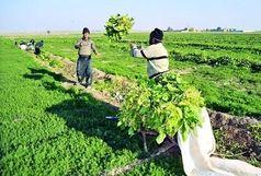 ۱۲۴ میلیون مترمکعب آب در مزارع و باغات آذربایجان غربی صرفهجویی شد