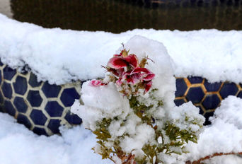 بارش اولین برف پاییزی تهران ۳