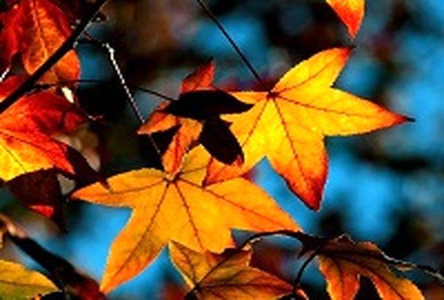 راههای پیشگیری از سرماخوردگی در پاییز