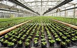 4600 هکتار به وسعت گلخانه های کشور اضافه می شود