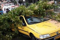سقوط یک اصله درخت در خیابان صنعت دوم شهر قدس