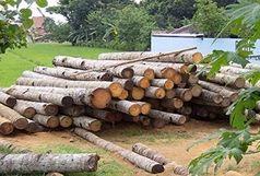 کشف بیش از 13 تن چوب قاچاق