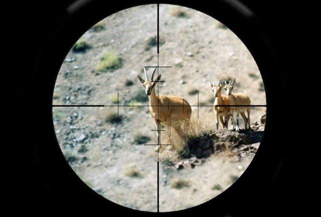 سازمان محیط زیست مجوز قتل عام حیات وحش را صادر نکرده است
