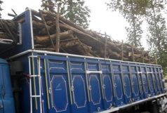کشف بیش از 14 تن چوب قاچاق