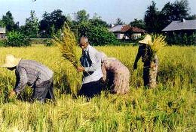 جزییات بستههای حمایتی بخش کشاورزی
