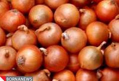 برداشت  ۱۶۶ هزار تن پیاز از مزارع آذربایجانغربی