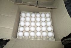 کشف 6 تن تخم مرغ فاقد مجوز
