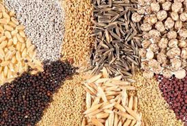 تامین ۱۴ هزار تن بذر اصلاح شده برای سال زراعی جدید