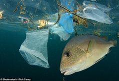 روزانه چقدر پلاستیک میخوریم؟