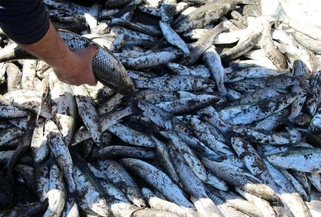 کشف 250 کیلوگرم ماهی غیر مجاز در قیر وکارزین