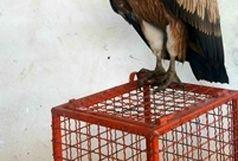 بازگشت دو گونه حیات وحش به طبیعت تالش