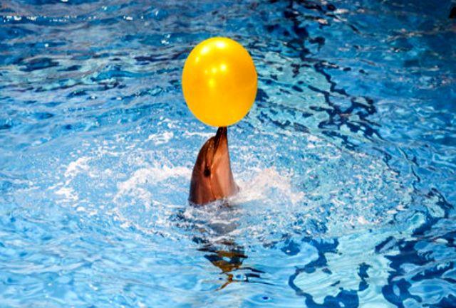 واکنش محیط زیست به علت مرگ دلفین برج میلاد