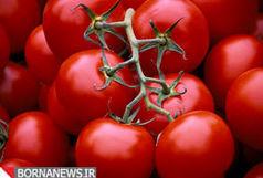 احتمال کاهش تولید رب در کشور و رابطه آن با گرانی گوجه فرنگی