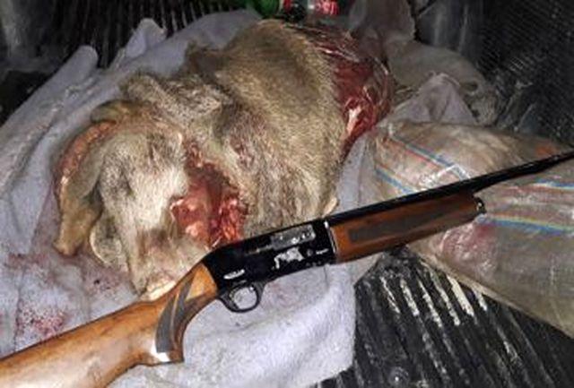 یک سال حبس و پرداخت جریمه برای شکارچی گراز در لرستان