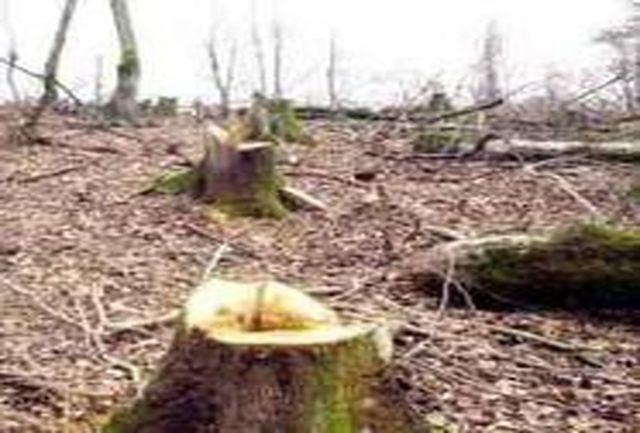 40 گروه ثابت و سیار به منظور جلوگیری از قطع درختان در جنگل های لرستان مستقر شد